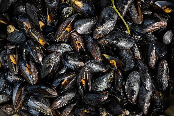 La cozza nera di Taranto