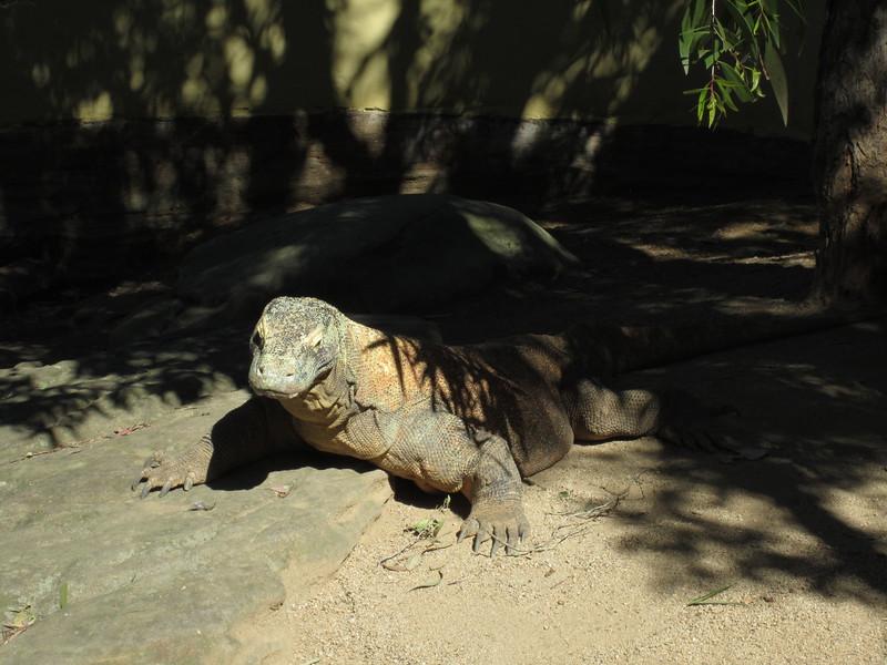 Sydney - Sydeny Zoo-19.JPG