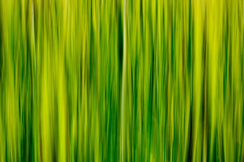 Grass impressions 5