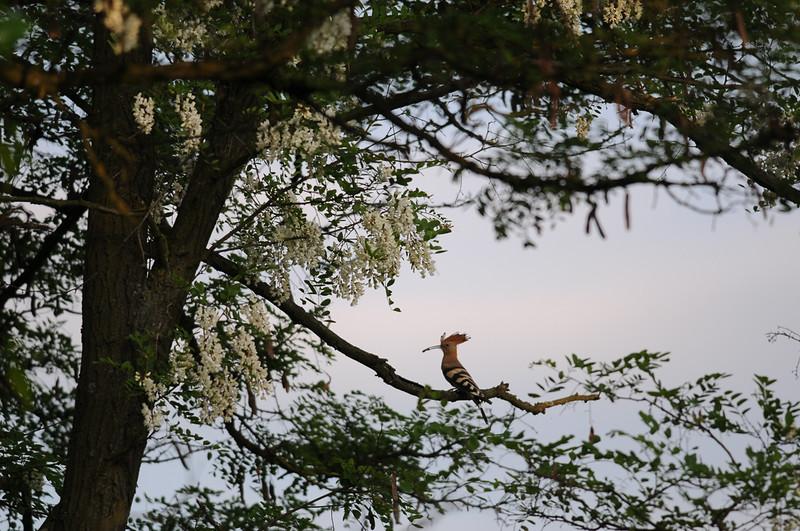 na drzewie.jpg