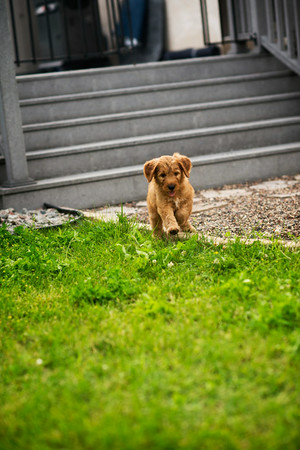 Odan New Puppy