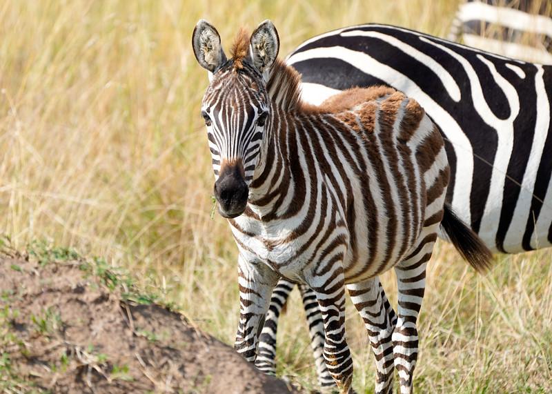 safari-2018-116.jpg