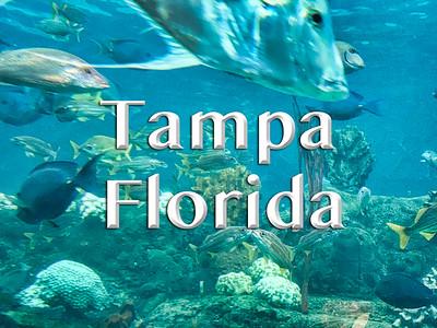2018-11-18 - Tampa