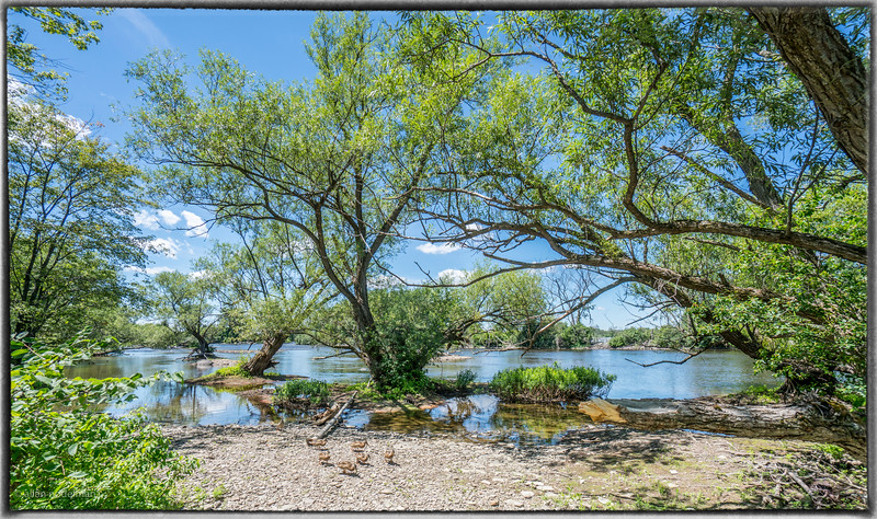 Shore of the Ottawa River near Mud Lake