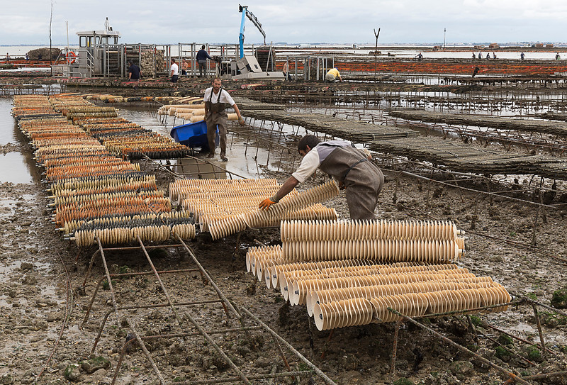 Laying Oyster Beds