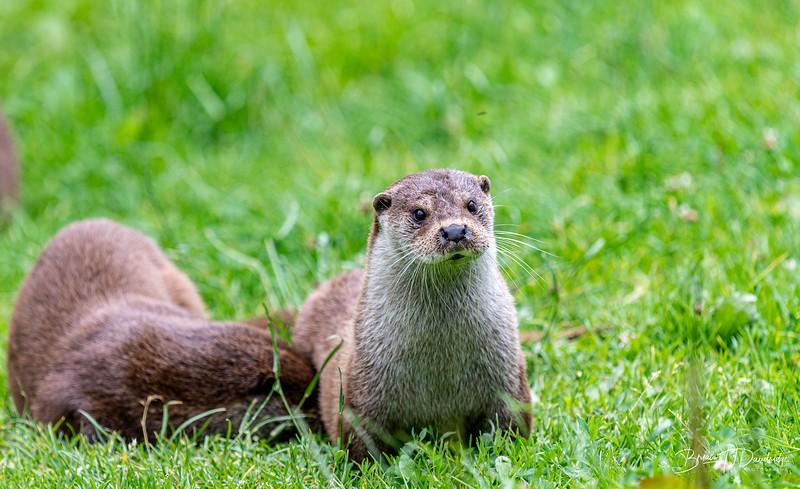British Wildlife Centre_Z6-7362.jpg