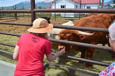 Arrowpoint Cattle Co.