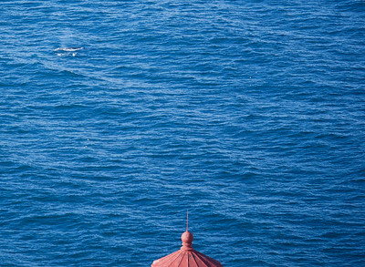 20180201 Point Reyes Whales and More