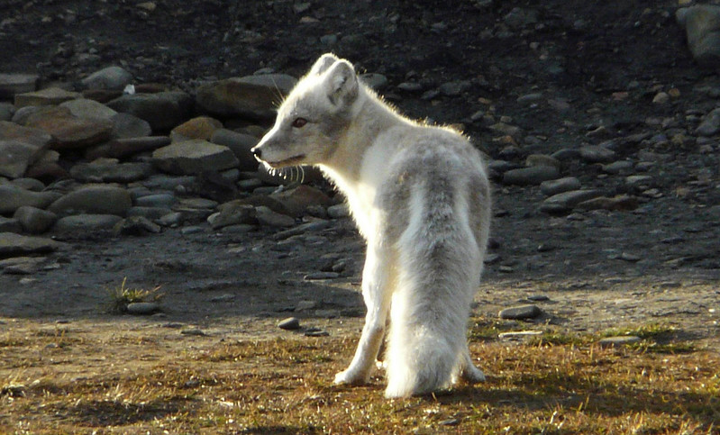 Svalbard_0021.jpg