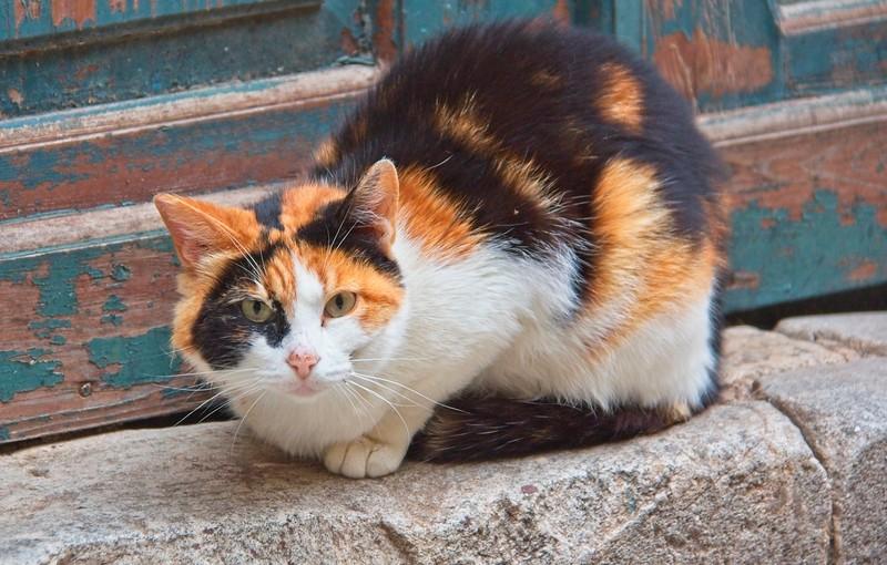 Cats of Dubrovnik, Croatia