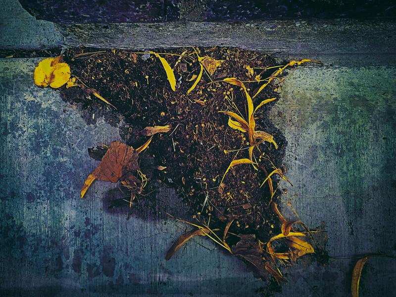 Cornucopia of Leaves and Seeds