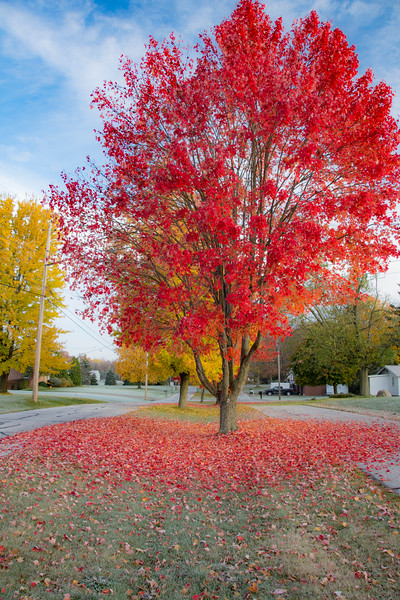 Fall-color-WingfootLakeSP-Nov11m.jpg