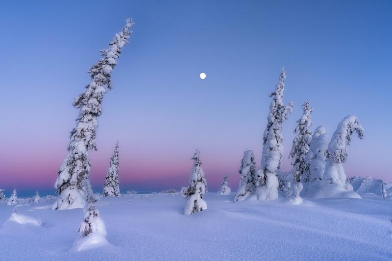 Full Moon Ice Trees.jpg