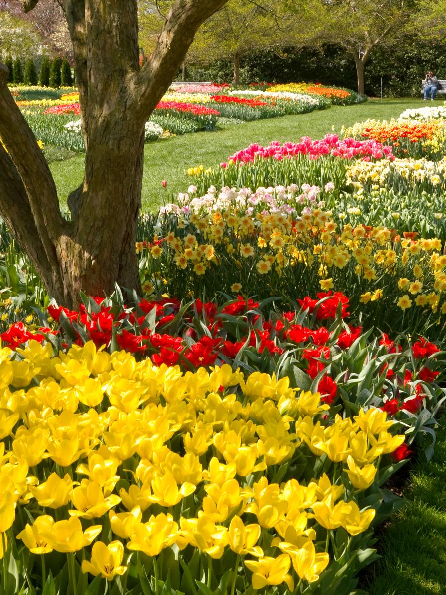 赏花的季节