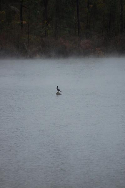 bird water fog.jpg