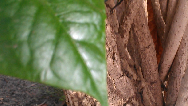 Leafy