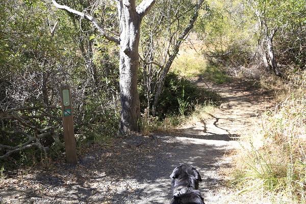 Bob Middagh Trail Oct 2016