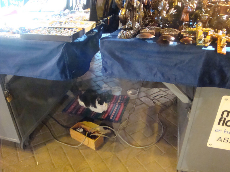 And stacks of stray cats, who seemed to be semi-adopted by the stall-owners