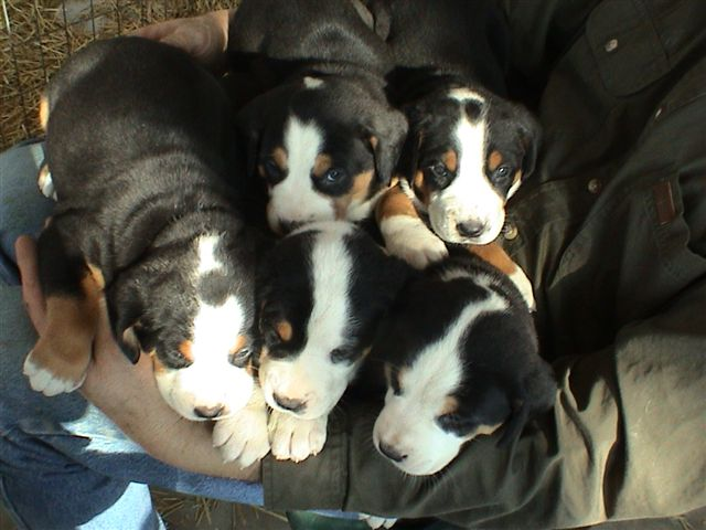 The Girl Puppies.JPG