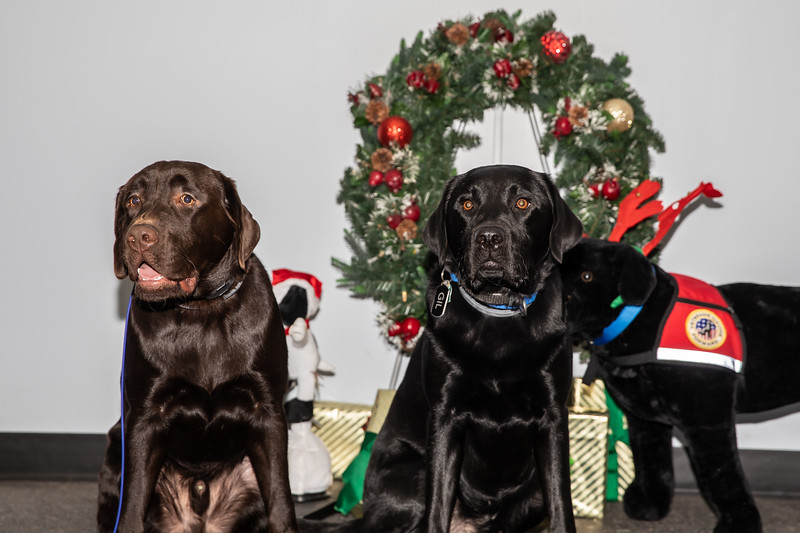Dogs (187 of 282).jpg