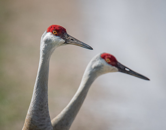 Vieria Wetlands - February 25, 2019