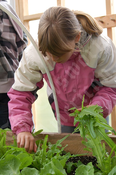 Little Seeds Greenhouse Takes Root at Brooksville Elementary