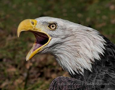 Animal Life - Birds