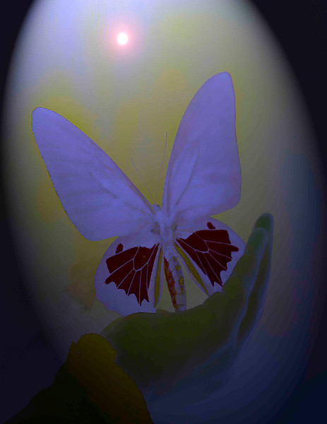 Heaven butterfly .jpg