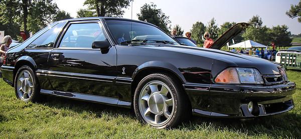 2013 Mustangs