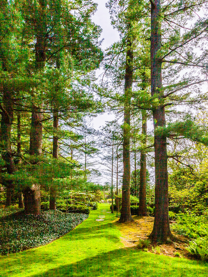 Chanticleer花园,春天的脚步