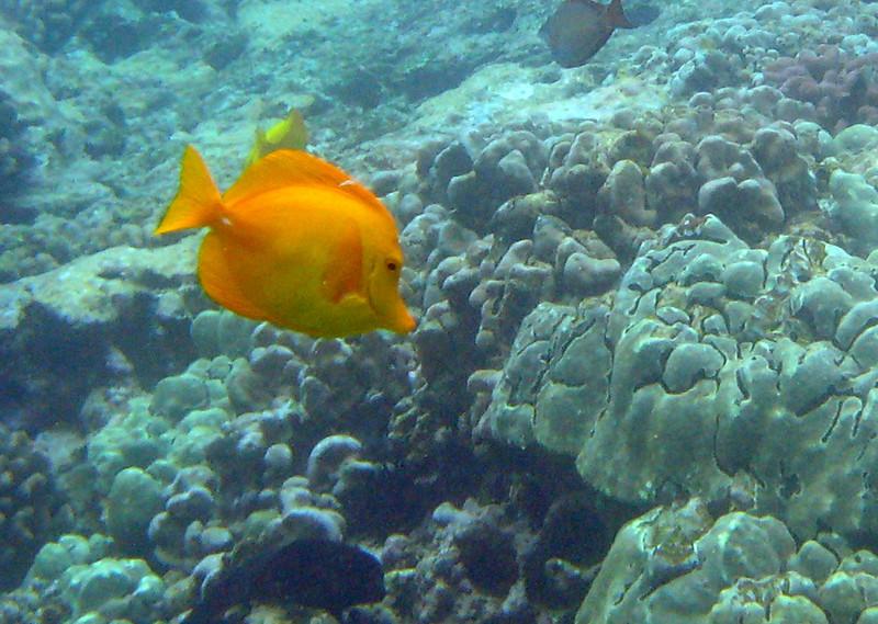 496- 20080416- Hawaii 20-Snorkelling IMG_0723.jpg