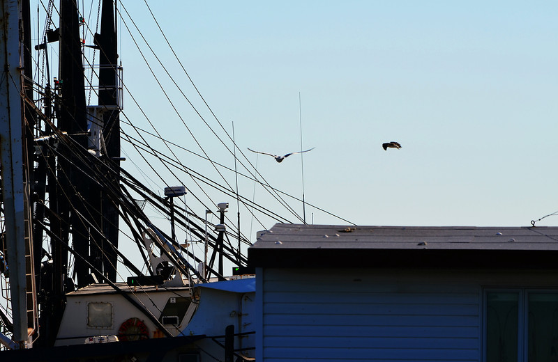Seagulls and Boats 1.jpg
