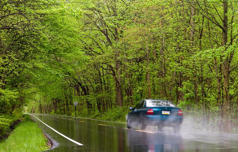 Tunnel of Trees in rain 2-.jpg