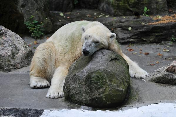Bronx Zoo 7-23-13