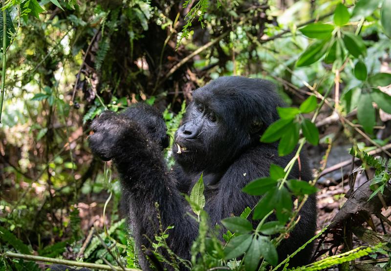 Uganda_T_Gor-131.jpg