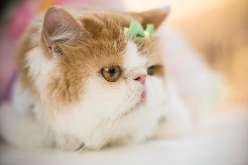 VividSnaps-The-Seletar-Mall-CAT-Dress-Up-Contest-027.jpg