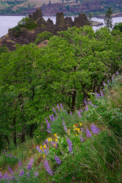 Wildflowers and Columbia River