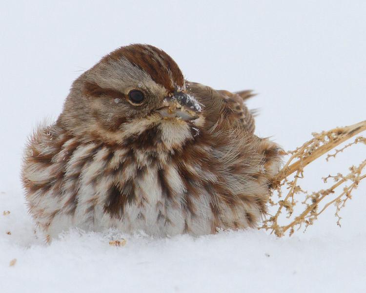 wasongsparrow1.jpg