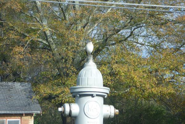 12-20 - Bird on a Hydrant