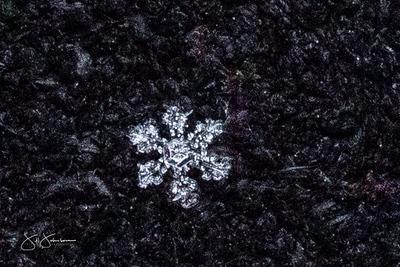 snowflakes-1427.jpg