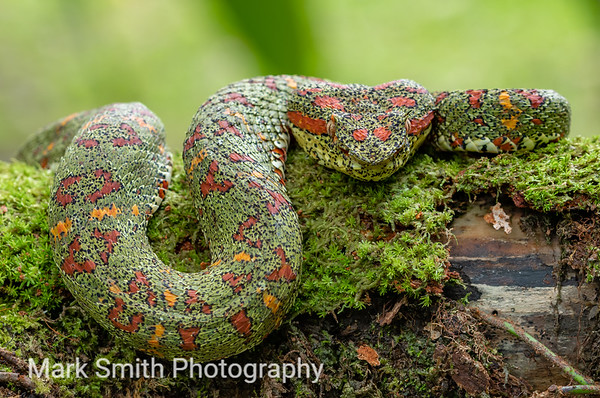 Costa Rica Wildlife Image Gallery