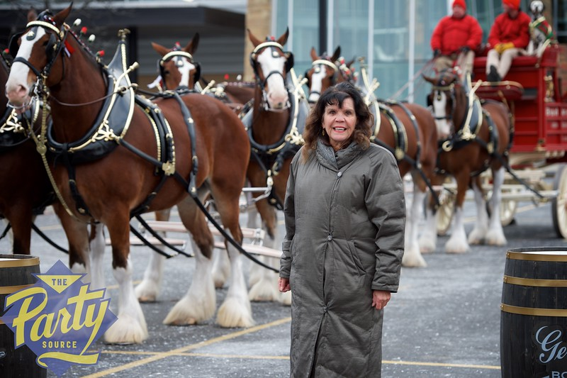 Clydesdale Portraits 14.jpg