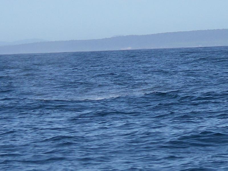 Sydney trip and Mirimbula 087.JPG