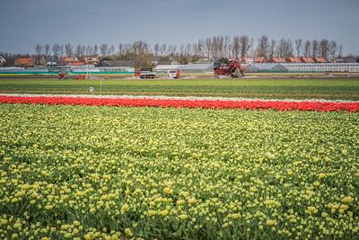 Bloemen en bollenvelden