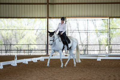 Horse 474