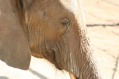 San Diego Wild Animal Park 10/9/05