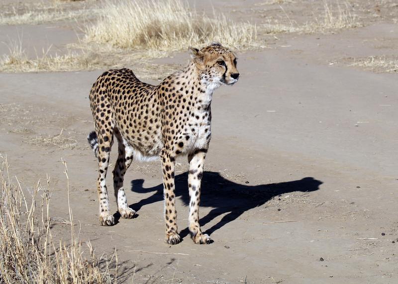 NAANKUSE - NAMIBIA