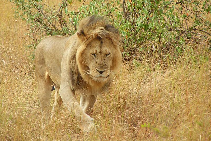 PICT0990 Masai Mara_upr1b.jpg