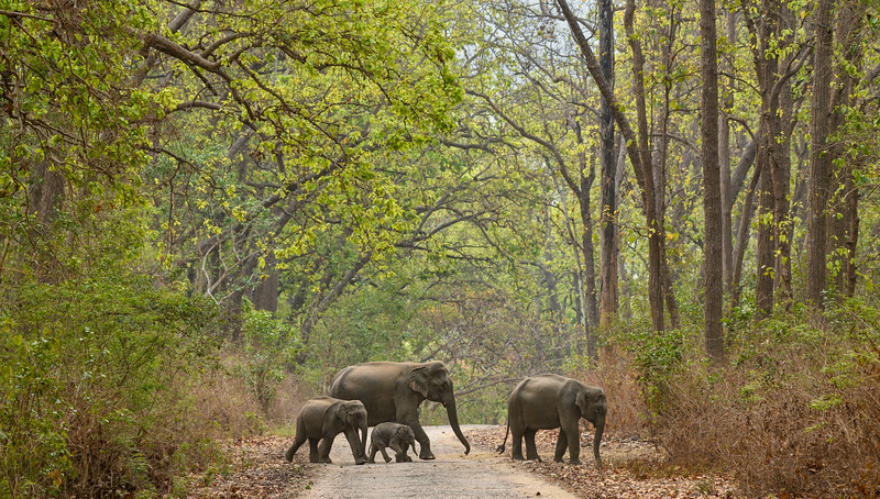 Corbett-Elephants.jpg