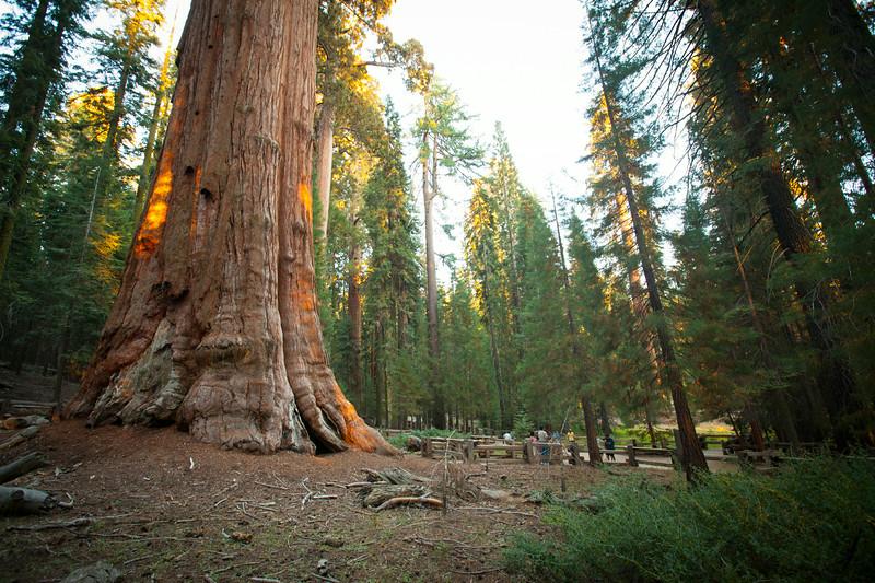 20140823_sequoia_0024.jpg